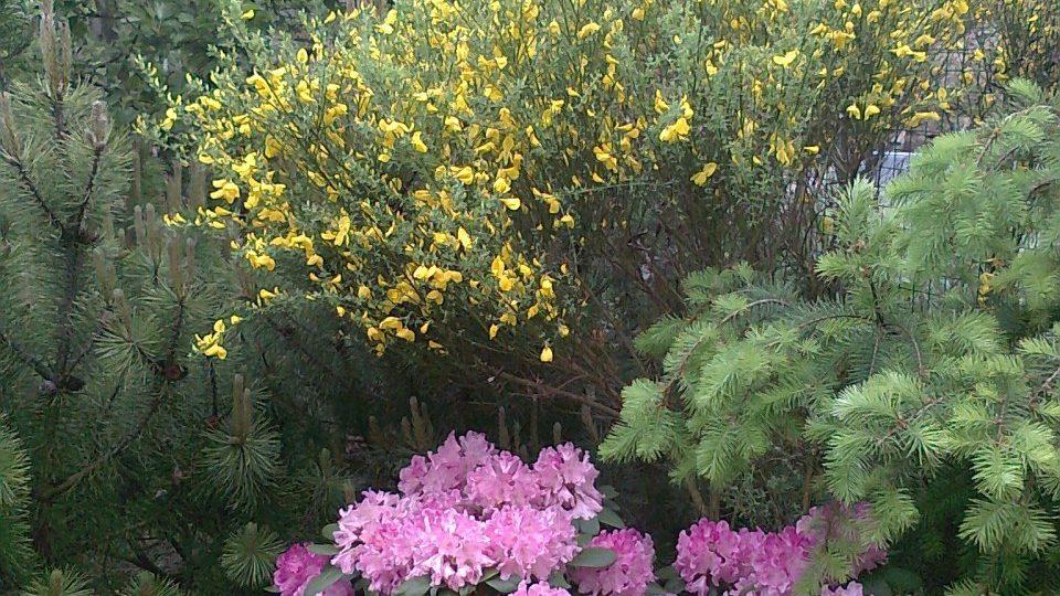 Snímek z fotografické soutěže pořadu Zelené světy - téma Kvetoucí keře. Zaslala Šárka Hybnerová