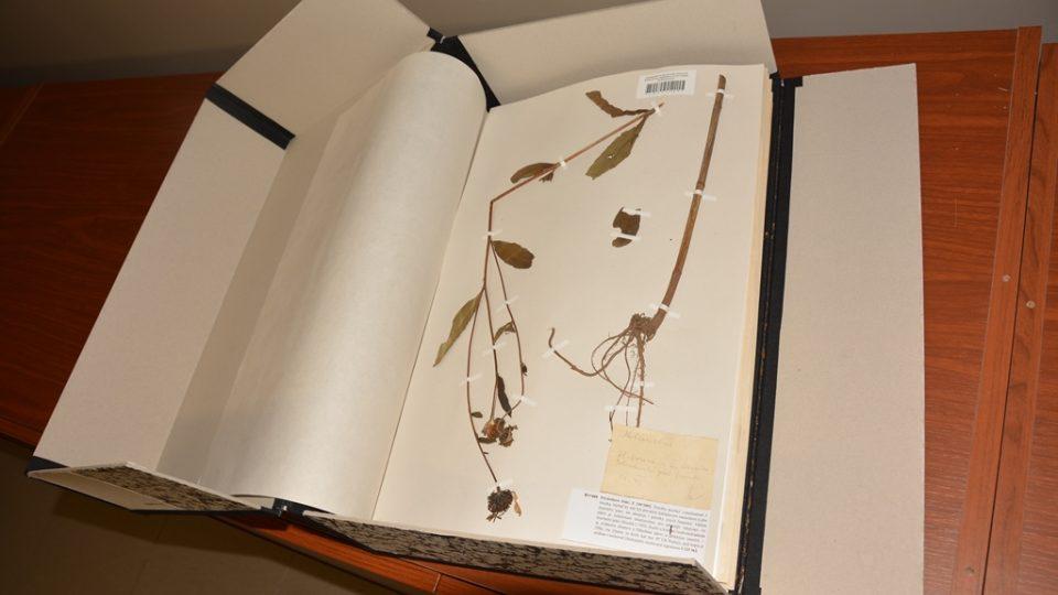 Herbář Jihočeského muzea, o který se stará Martin Lepší