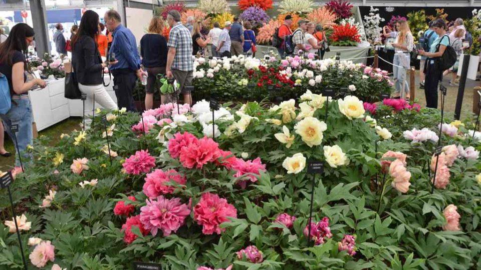 Expozice pivoněk na Chelsea Flower Show