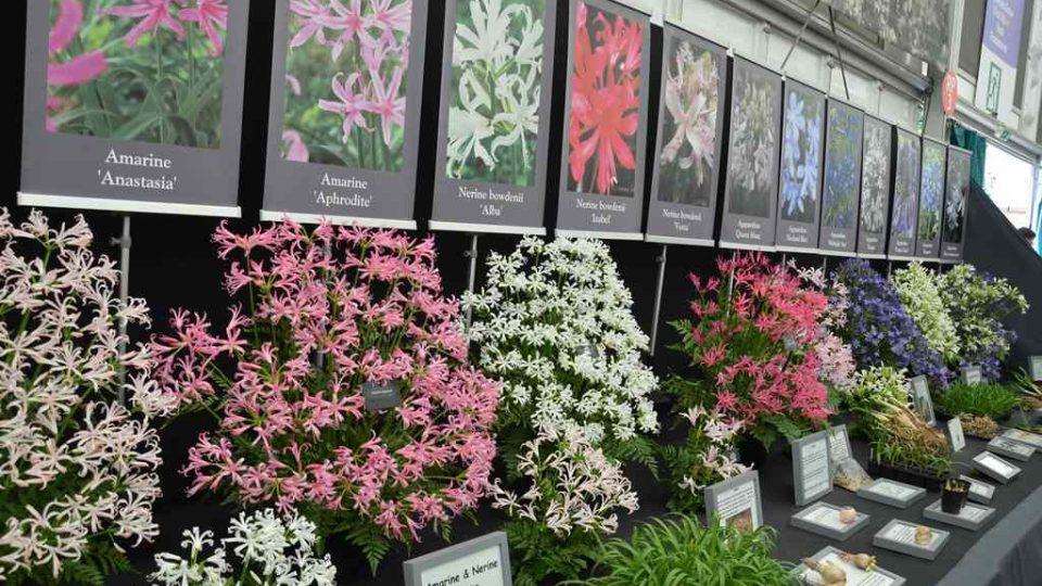 Zahradnická výstava Chelsea Flower Show