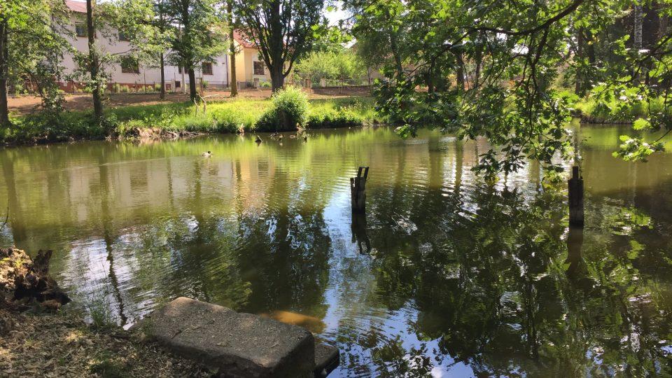 Arboretum, Jemnice