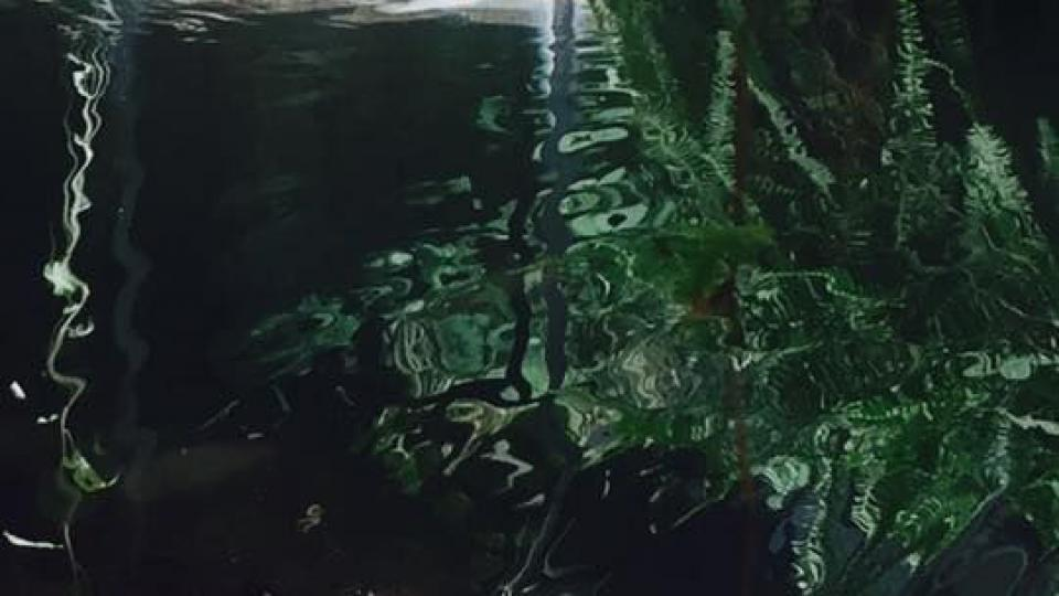 Vypouštění Krakena můžete sledovat v ZOO Dvůr Králové nad Labem
