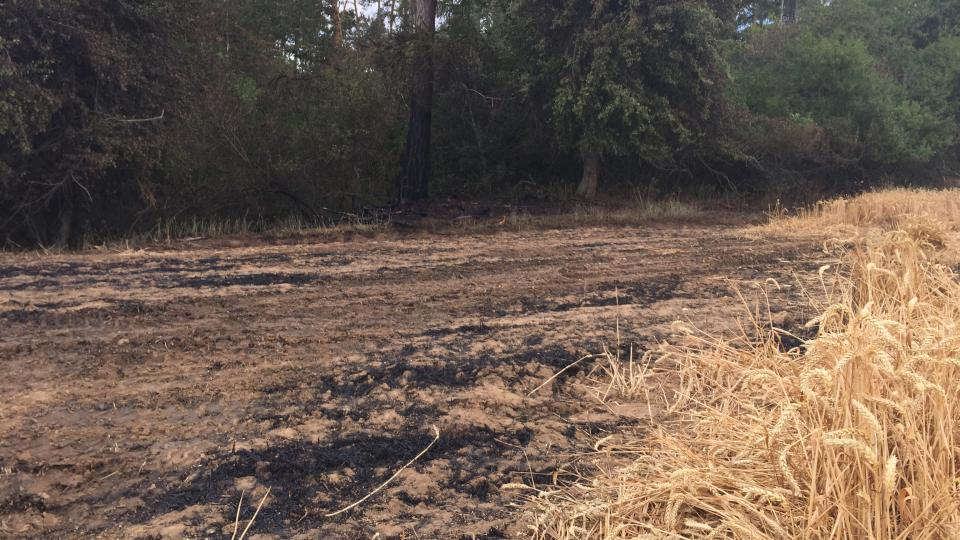 Požár pole, Myslibořice