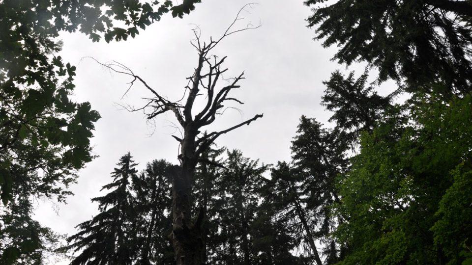 Stromy jsou v pralese ponechány svému osudu