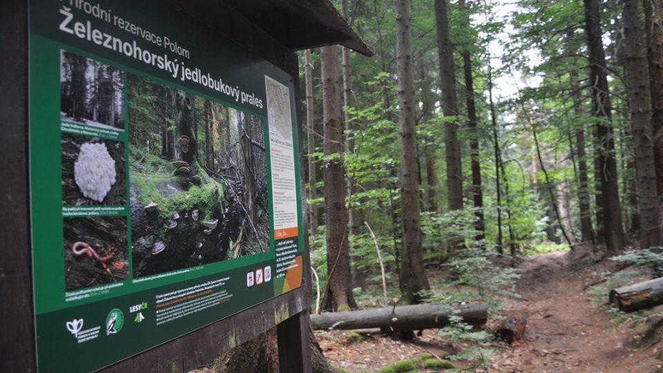 Prales Polom s buky starými až 370 let