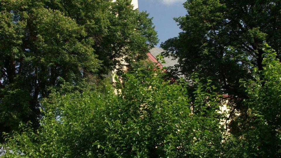 Keře moruší v Zaloňově u příjezdové cesty od Jaroměře