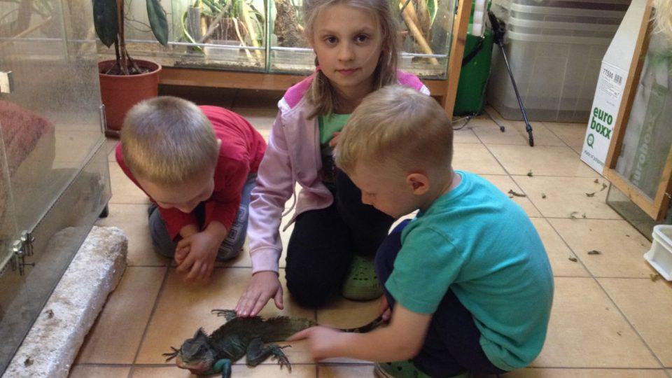 Chameleona chovají v malé exotické ZOO u paní Lenky Sýkorové v Zábrodí na Náchodsku