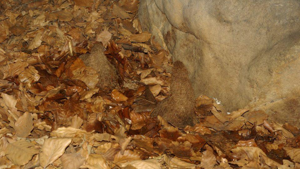 Kořenové krápníky v jeskyni v Prachovských skalách