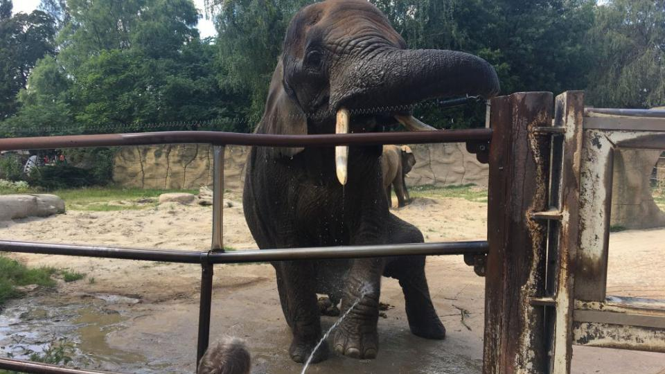 Sloni v ZOO Dvůr Králové nad Labem