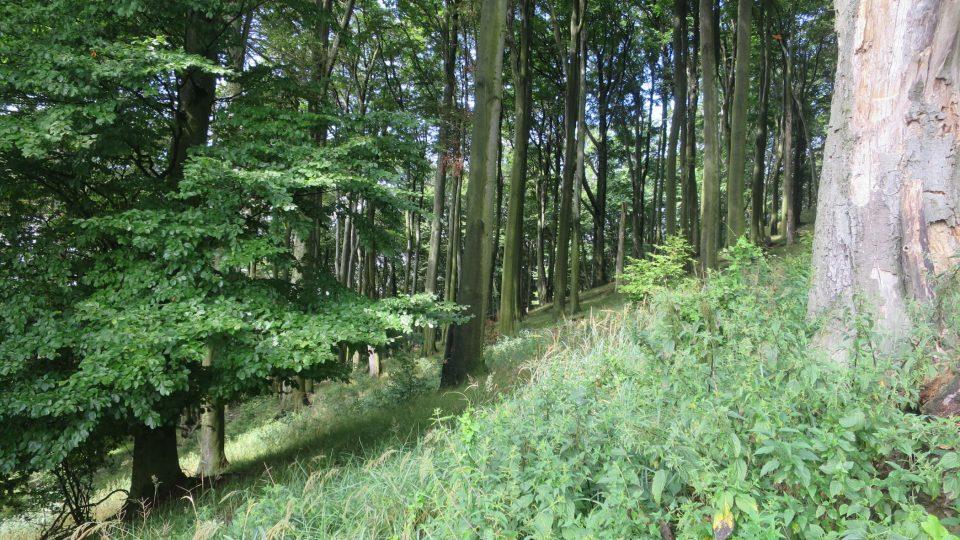 Hradisko Holý kopec leží zhruba dva kilometry od hradu Buchlova na Uherskohradišťsku