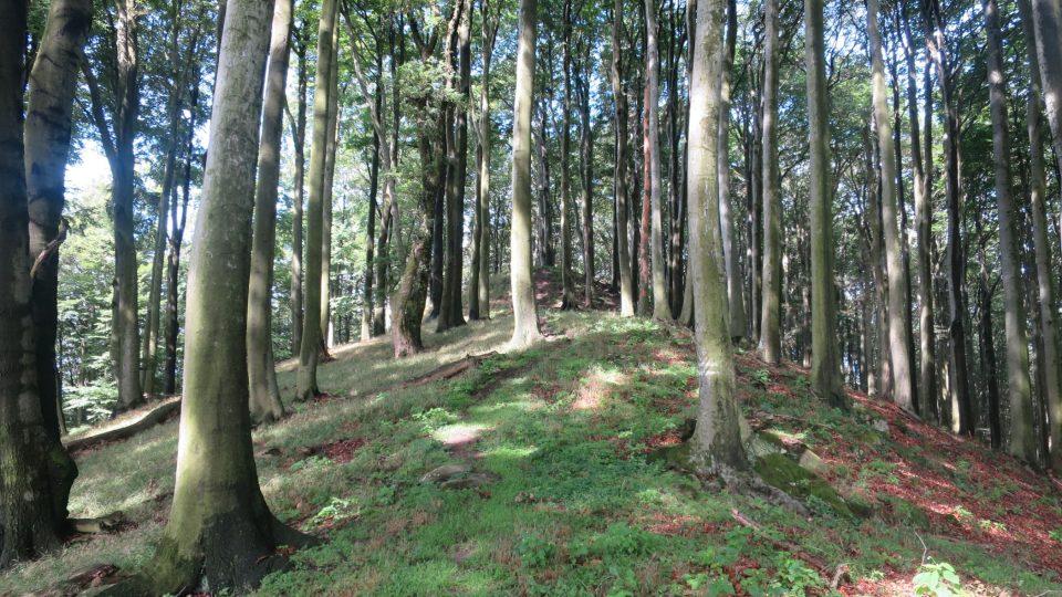 Holý kopec je svou rozlohou dvanácti hektarů patrně největším hradiskem z doby popelnicových polí na Moravě