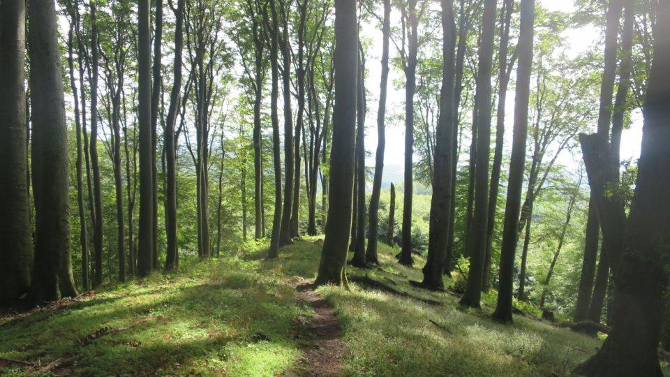 Hradisko Holý kopec u Buchlovic