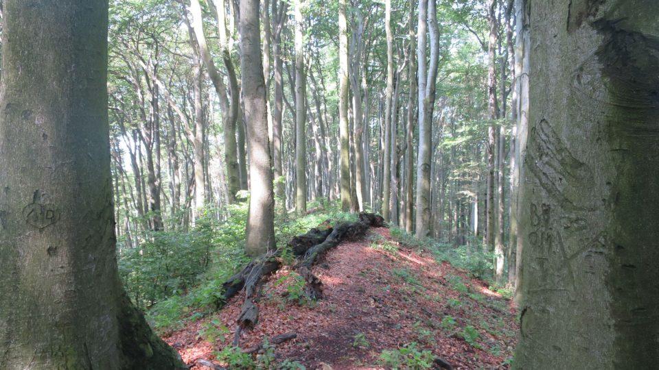 Hradisko má necelých dvanáct hektarů, většinou ho budovali otroci