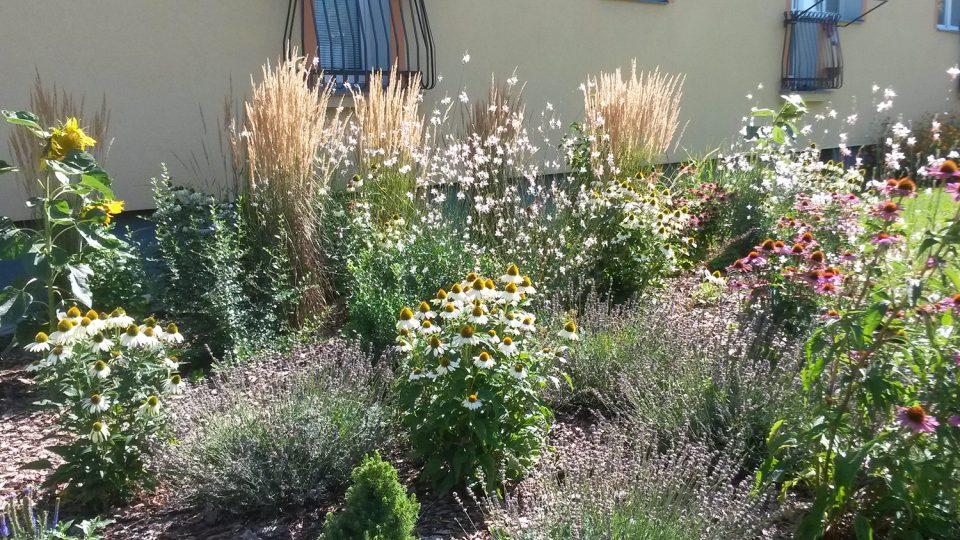 Zahradníci v Pardubicích letos vysadili například třapatku, levanduli nebo slunečnici