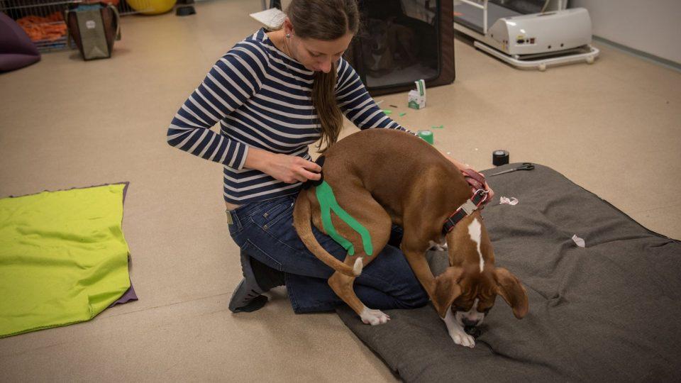 Stejně jako pro nás i pro psa může být masáž prospěšná