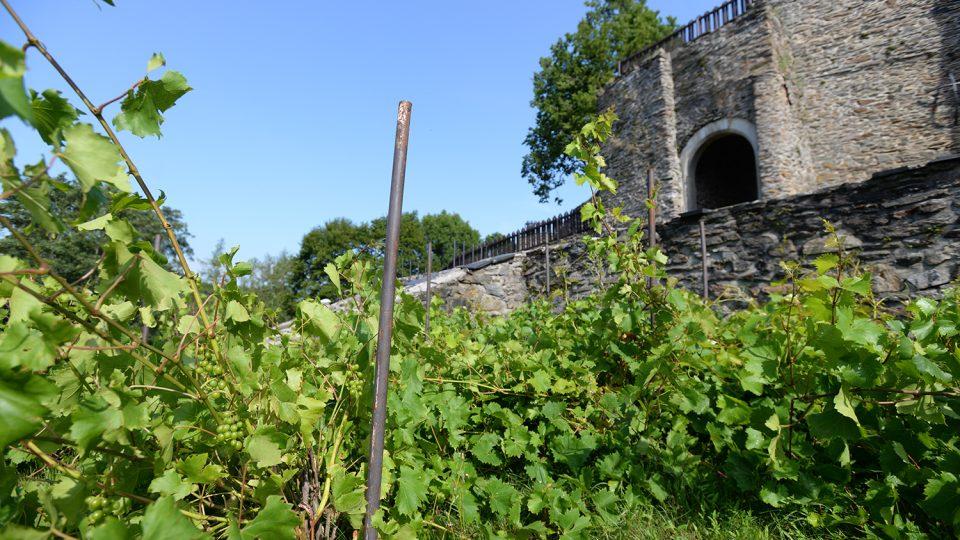 Součástí svojanovské zahrady je také malý vinohrad