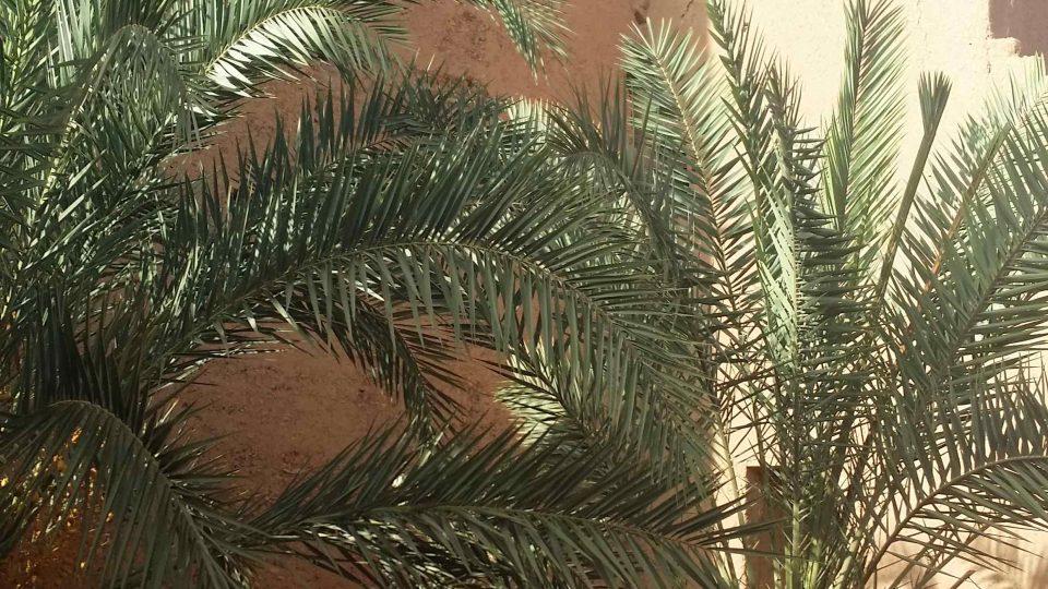 Hliněné hradby kasby Šejcha al-Arabího v údolí řeky Draa