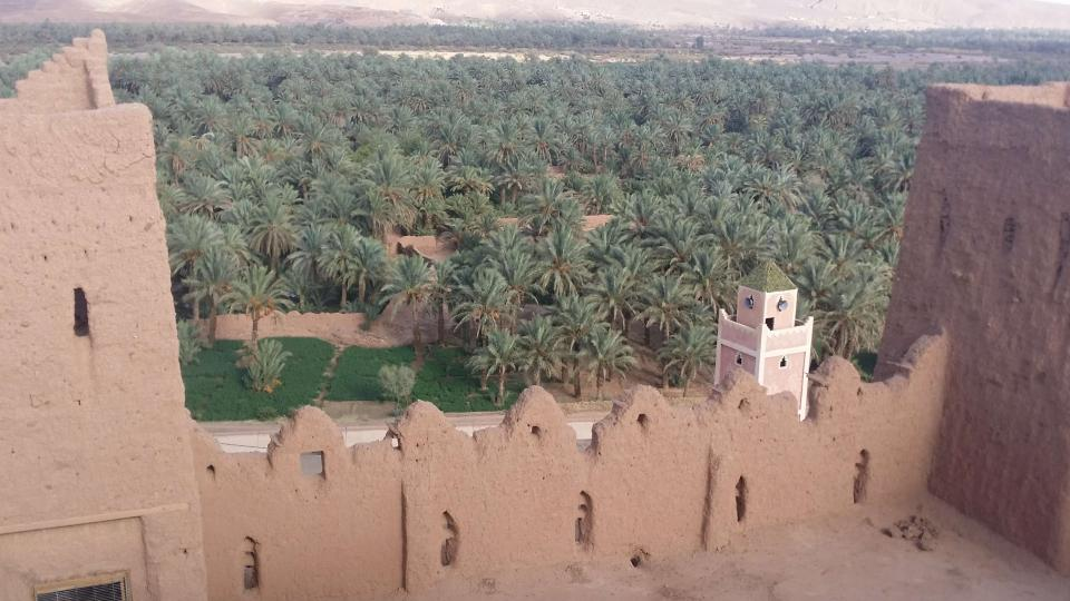 Výhled z věže kasby na palmový háj