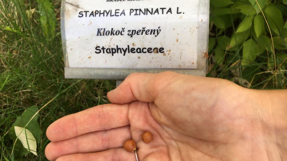 Léčivou zahradu najdete v centru Hradce Králové. Načerpáte v ní nové síly a ještě se mnoho dozvíte