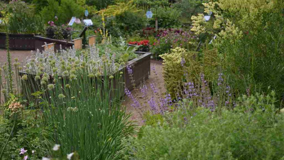 Botanická zahrada v nizozemském Utrechtu byla dalším místem, kam zavítala moderátorsky zahradnická dvojice Hanka Šoberová a Pavel Chlouba