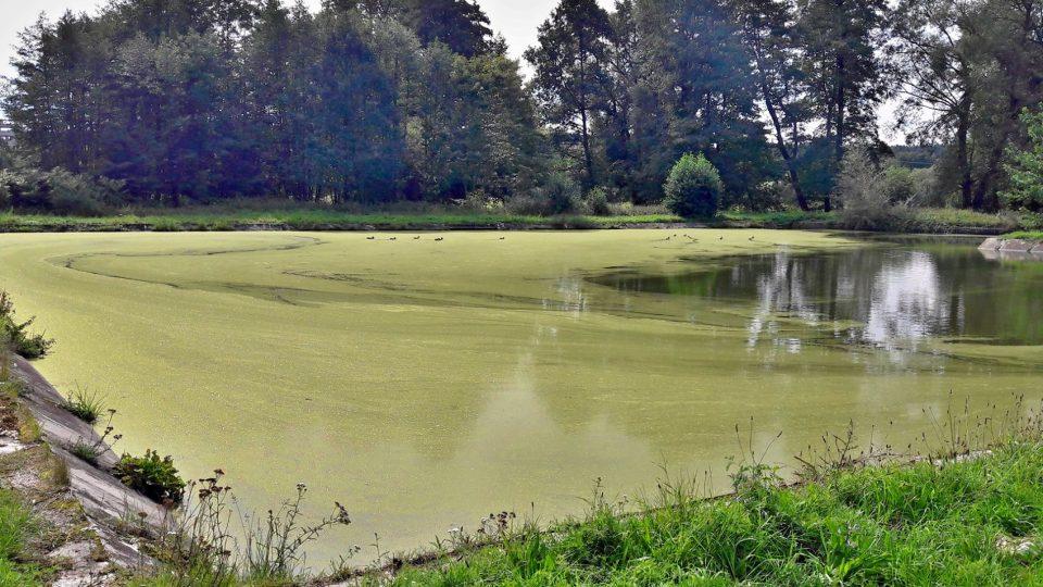 Novou přírodní podobu mají získat i bývalá koupaliště v Třemošné a Záluží