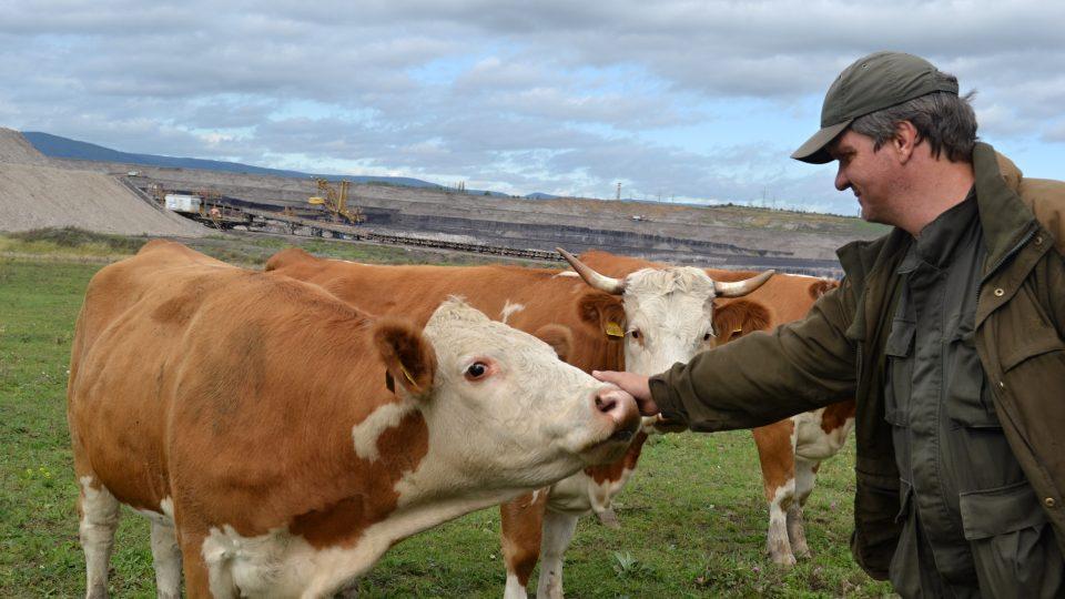 Krávy na šachtě