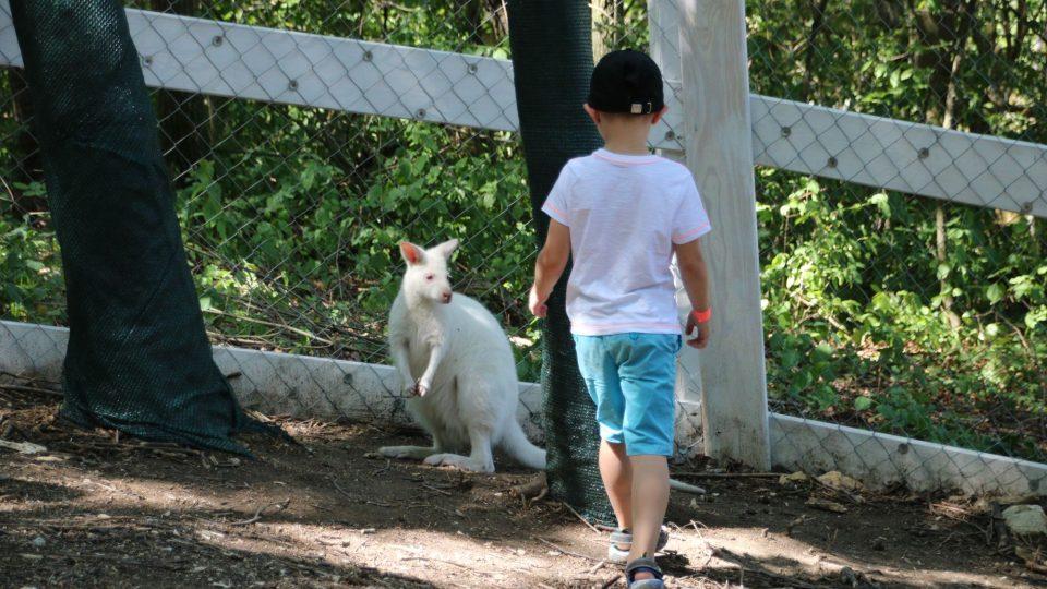 Návštěvníci chodí přímo mezi zvířátka