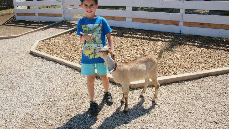 Děti si mohou na zvířata sáhnout