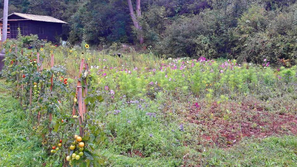 Rozumět včelám se naučíte v Kožlanském Májino údolí