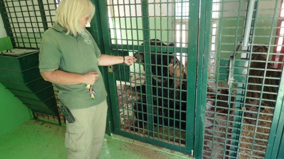 Diana Barnasová s jedním ze zachráněných medvědů