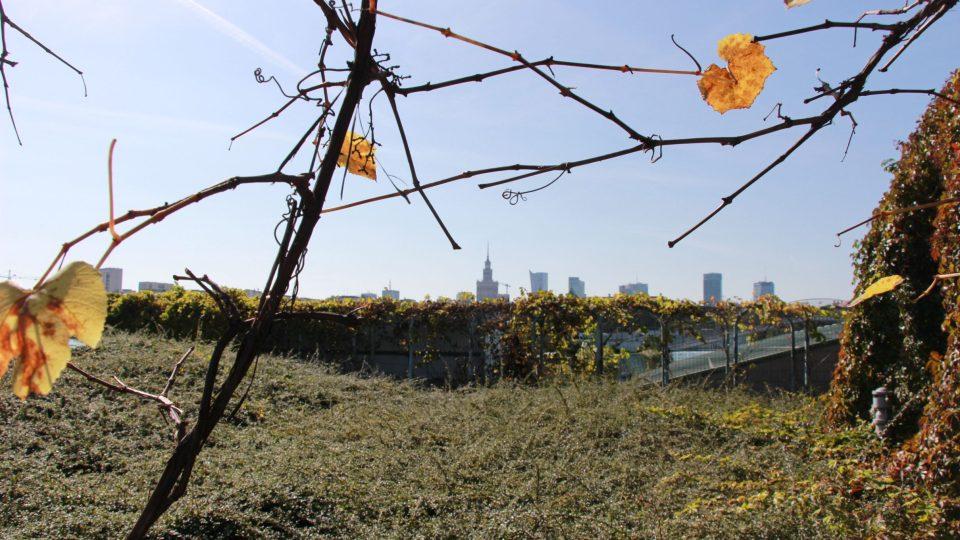 Střešní zahrada má své kouzlo i na podzim
