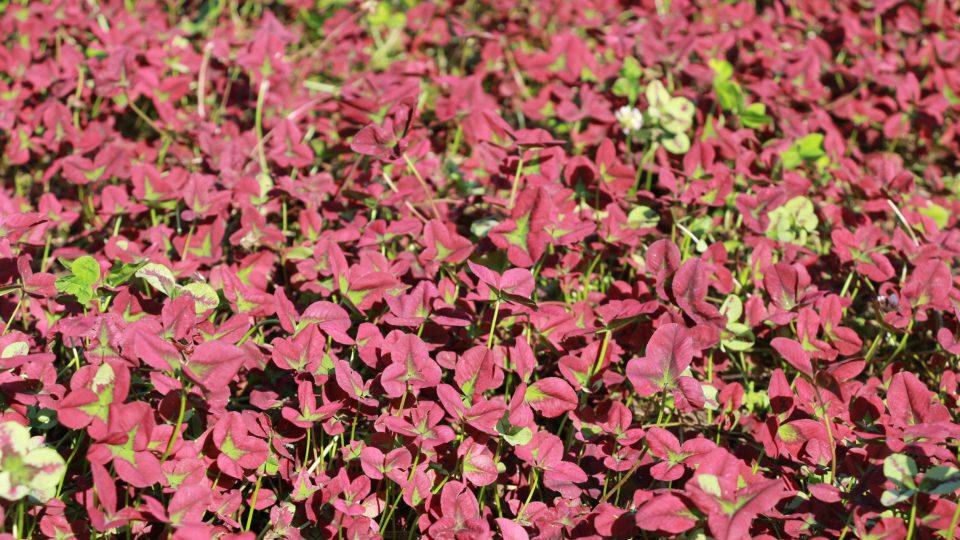 Za rozkvetlé plochy jsou vděční i varšavští motýli a včely