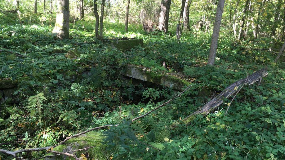 Pozůstatky zaniklé vesnice v česko-rakouském pokraničí v České Kanadě