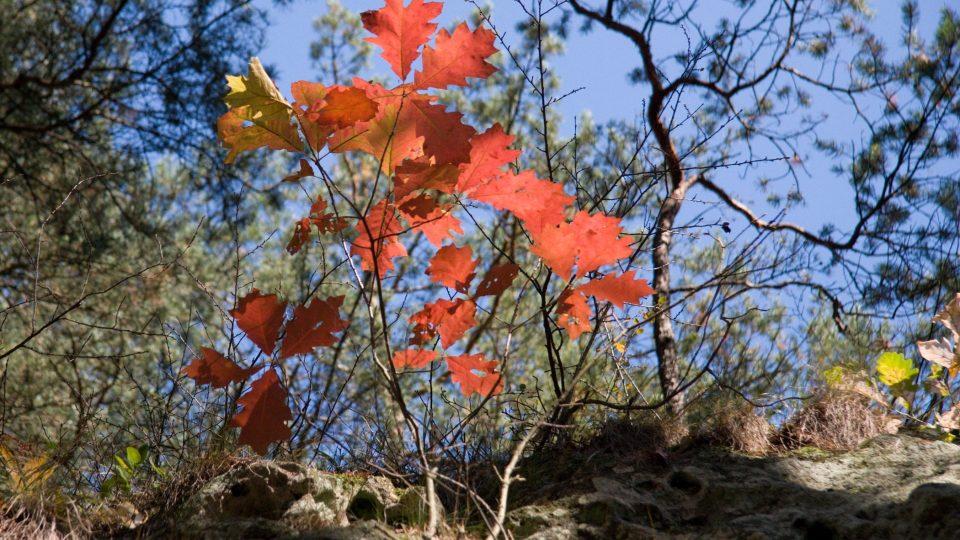 Barvy podzimu na Psím kostelu