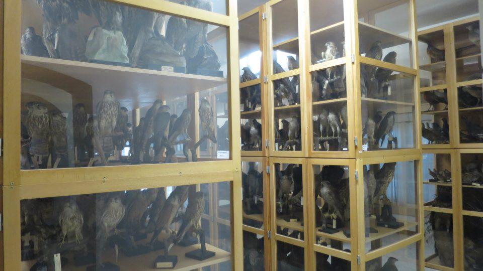 Rozsáhlá kolekce vycpanin je uložená ve věži pardubického zámku