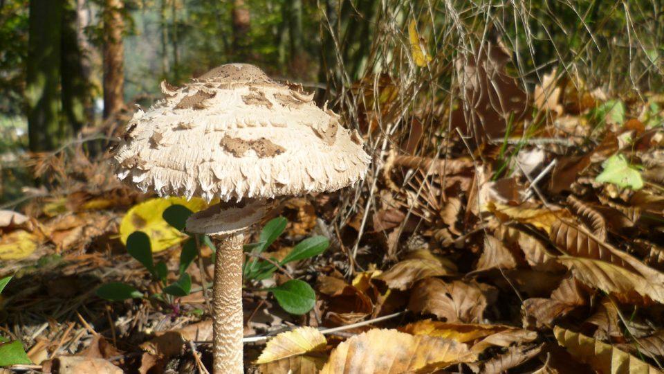 Podzimní houbařský ráj