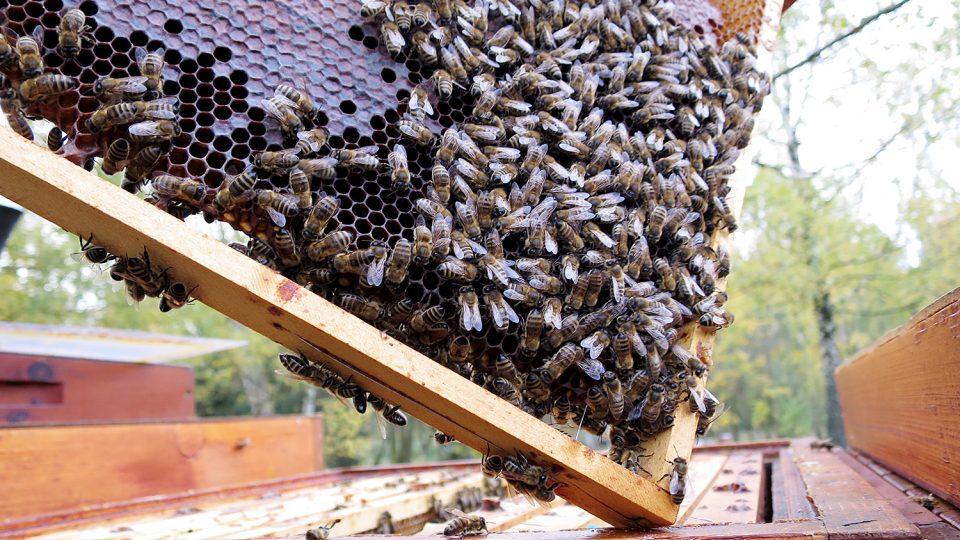 Včely z chovu nasavrckého učiliště se připravují na zimu