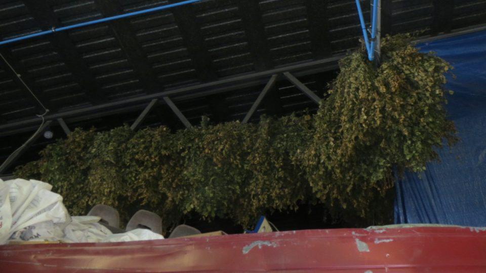 Březové větve skladují pod střechou