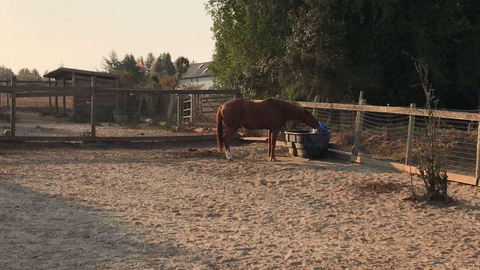 Farma Icssoma poskytuje azyl ohroženým koním