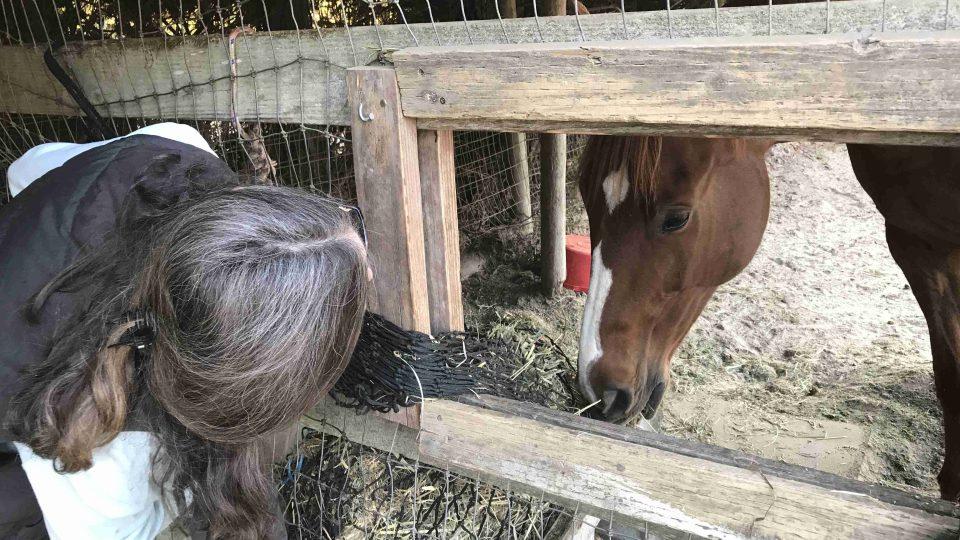 Farmářka Susan Hornsteinová při krmení jednoho z koní, kterým poskytla azyl