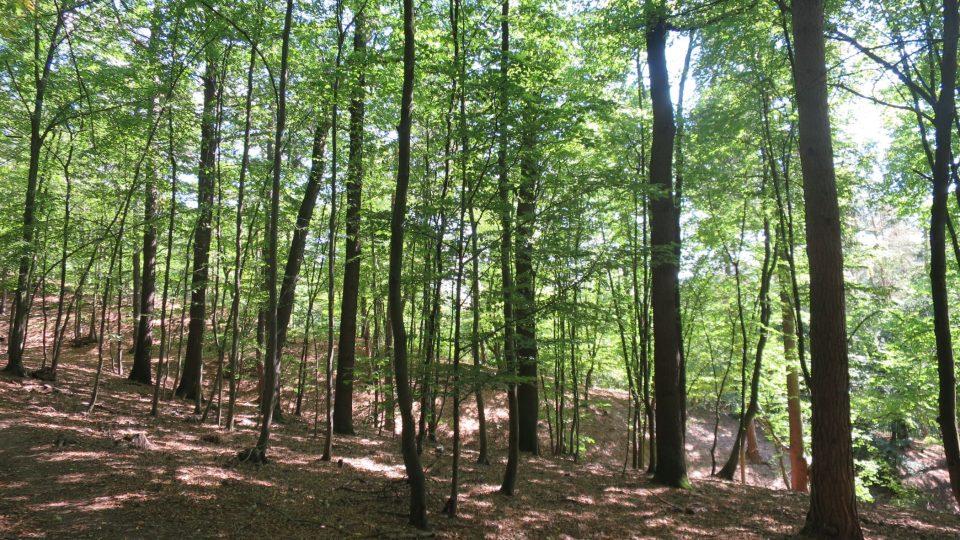 Na skalách je příjemný les