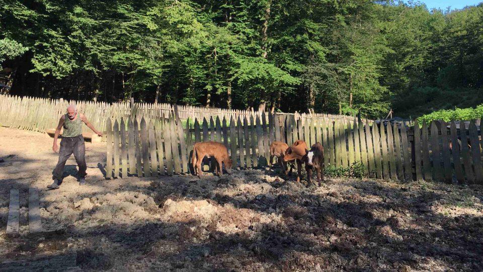 Svobodný život si užívá majitel i jeho zvířecí chráněnci