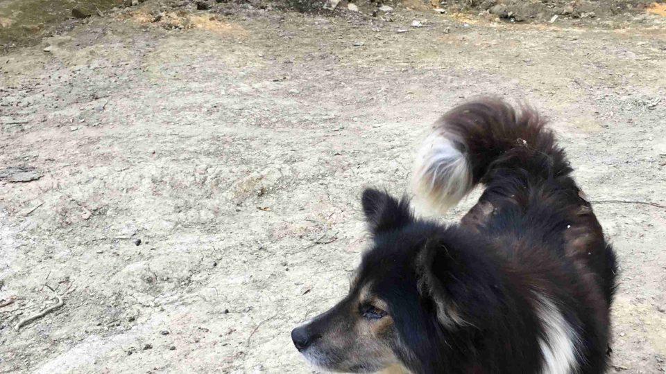 Pes a kočka panu Arménovi hospodářský užitek nepřinášejí, ale jsou dobrými společníky