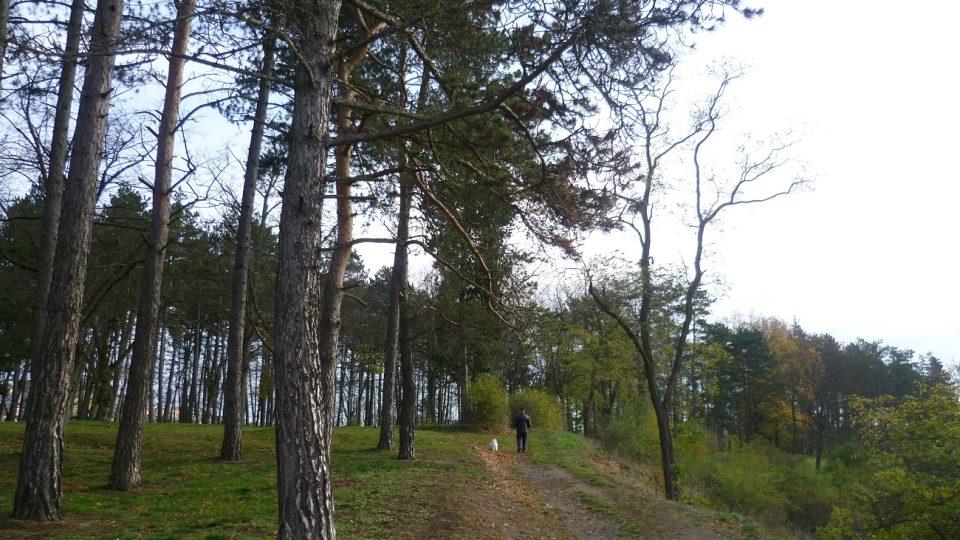 Procházka po Hrádku
