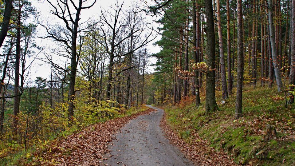 Cesta vedoucí od javornického zámku k Čertovým kazatelnám je vhodná i pro cyklisty