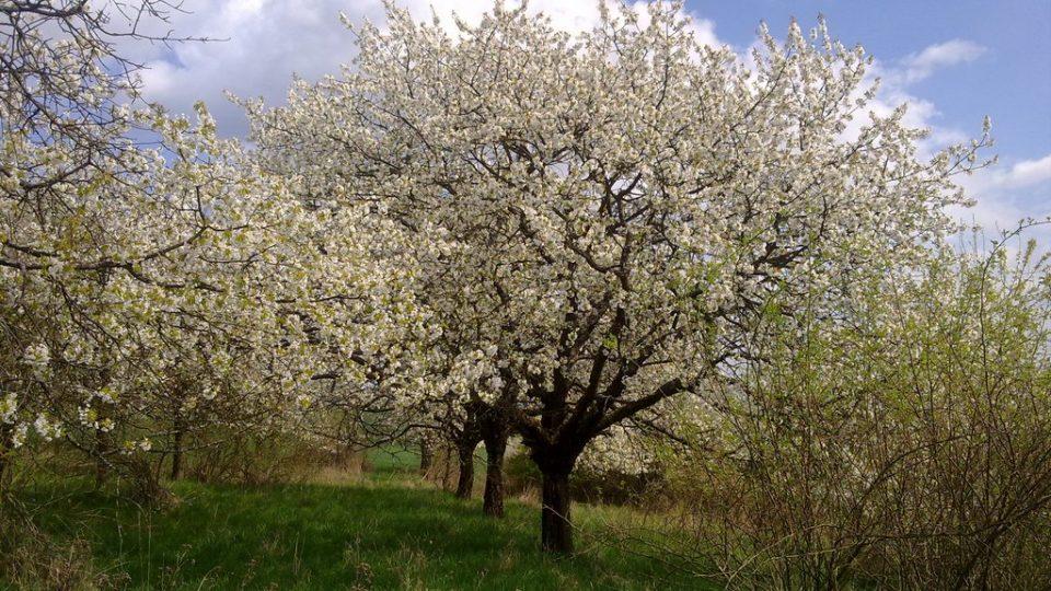 Sad na jaře