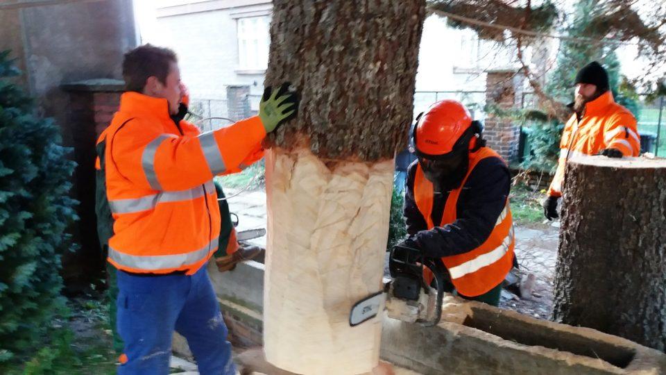 Dřevaři upravují kmen vánočního stromu pro Kutnou Horu