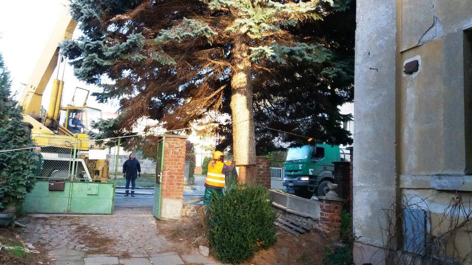 Před odvozem stromu bylo nezbytné upravit jeho kmen