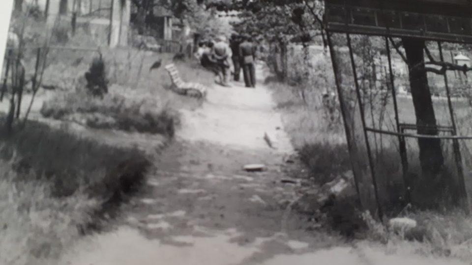 Klece v ZOO svařovali učni z Gottwaldova domova mládeže v Kladně