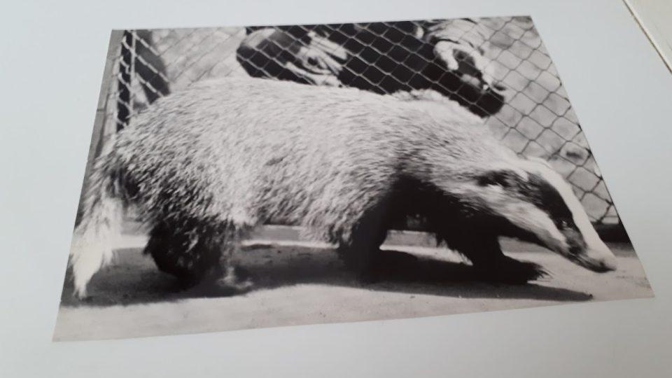 Staré fotografie připomínají slávu bývalé kladenské ZOO